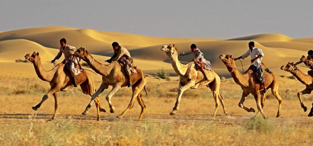 В создании верблюдов - чудесные знамения, доказывающие могущество Аллаха